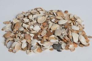 Halfverharding: Gebroken schelpen
