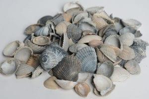 Halfverharding: Schone schelpen
